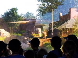 zoo_camp