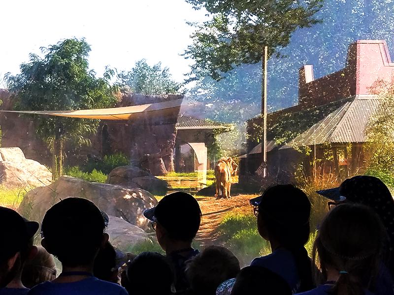Go Wild At Zoo Camp!